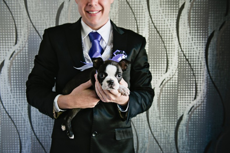 Boston terrier with groom