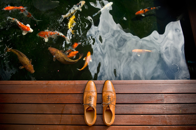 brown shoes coy fish