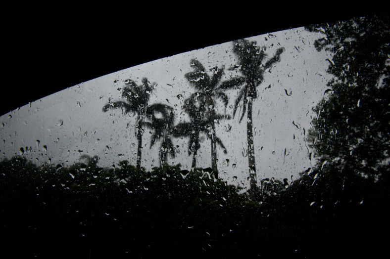 coco nut trees in the rain