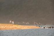 couple ona beach with birds