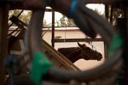 Gili horse, Lombok