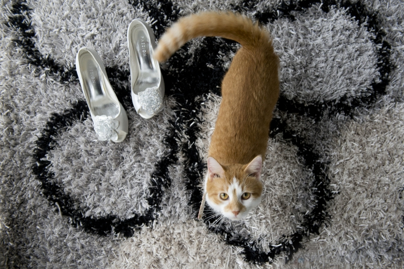 Cat with Shoes