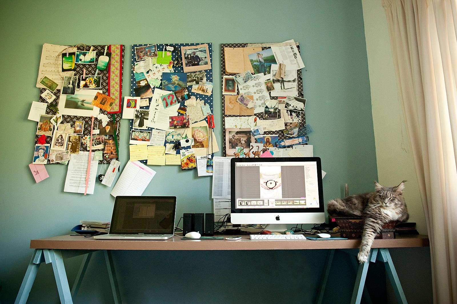 Main Coon at desk