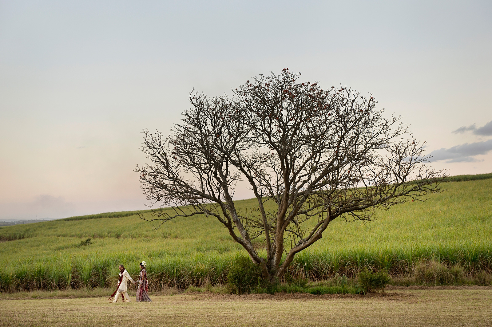 Indian bride and groom with tree