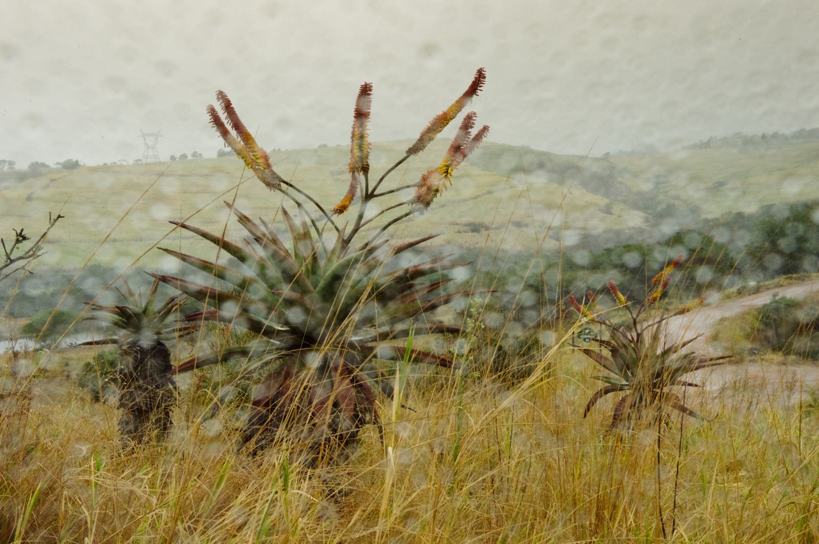 game farm in the rain