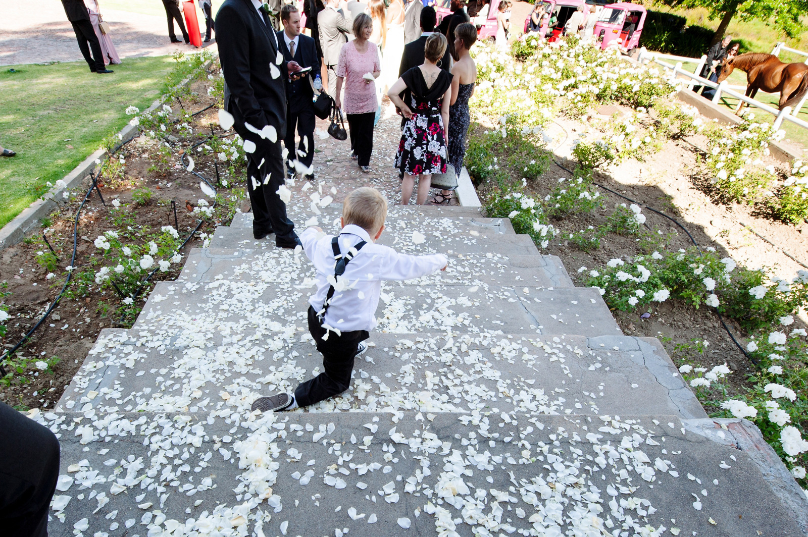 Child falls down petaled stairs