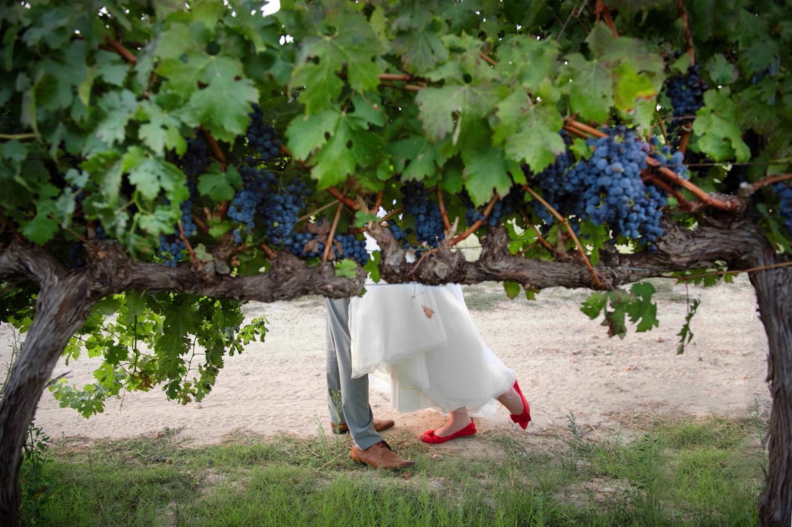 winelands wedding