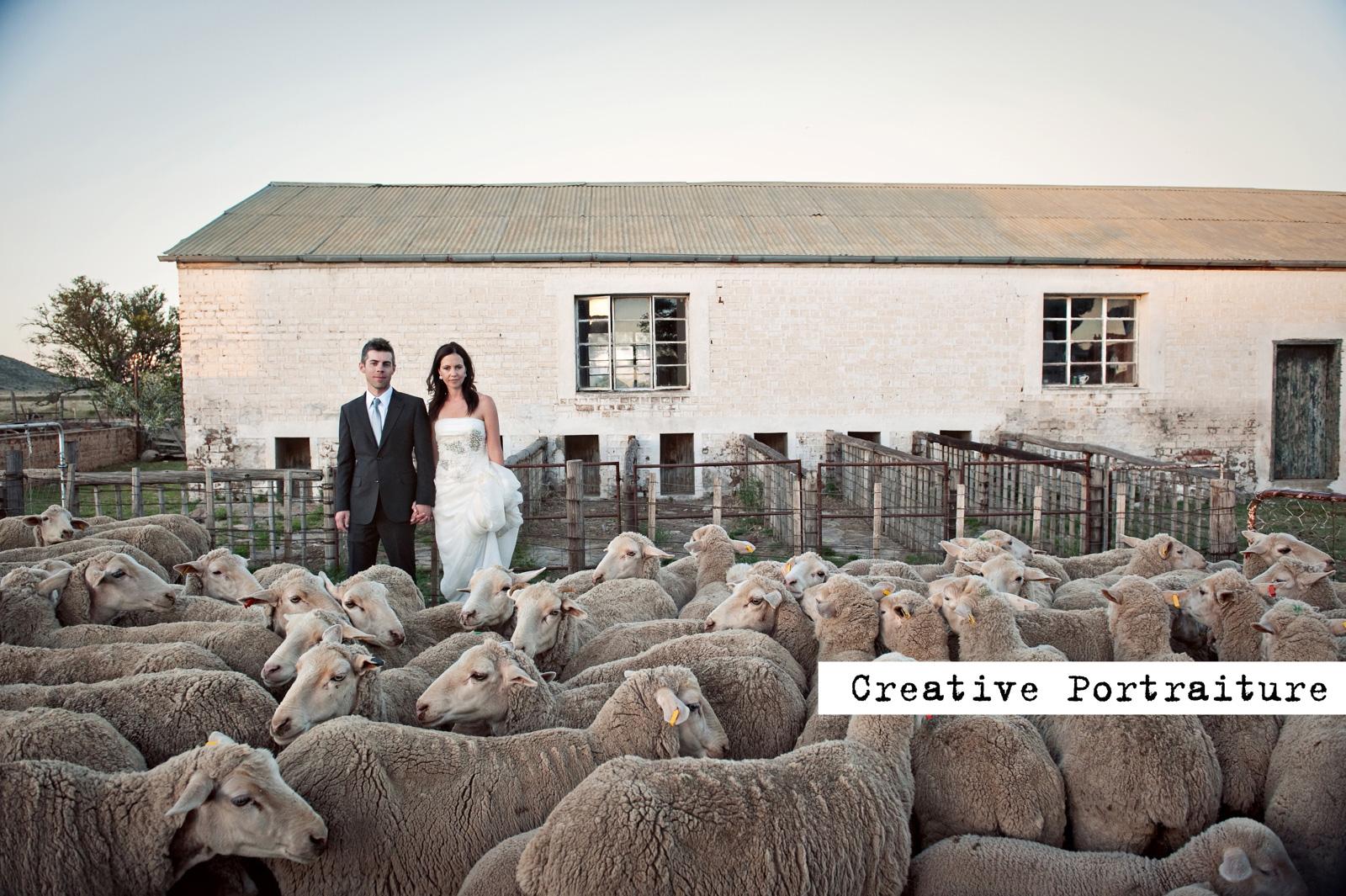 Wedding couple with sheep in the karoo