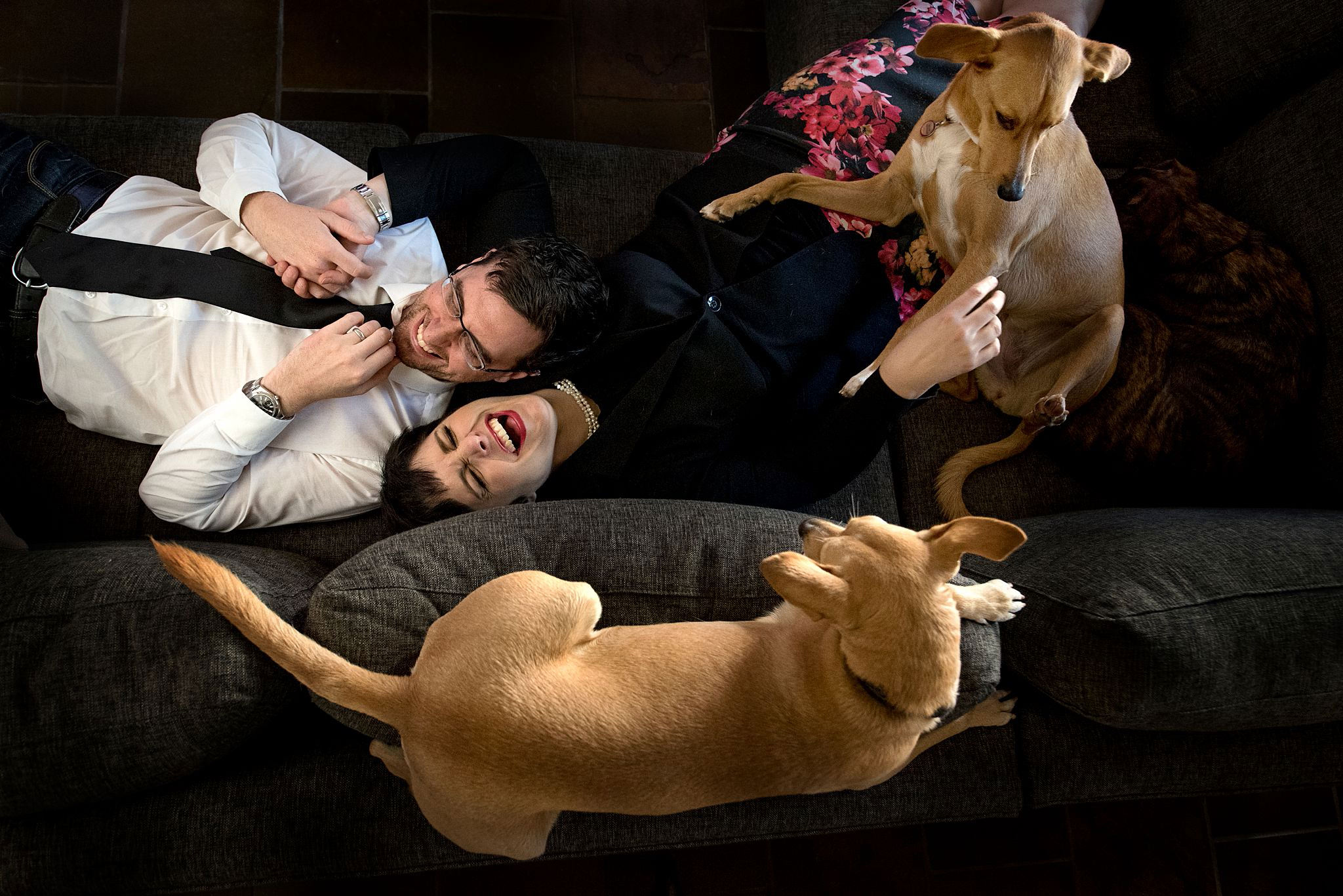 Rescue dogs and their owners